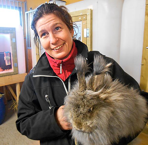 Det blir mycket päls att spinna ull av efter en angorakanin. När de är nyklippta blir se så pigga och livliga. De tycks njuta av att få sin tunga päls klippt, påpekar Helena Lundqvist på gården Västra Lärketorp.