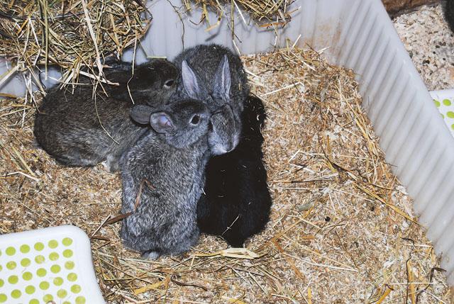 Det är inte konstigt att man kan älska kaniner – de är ju så söta!