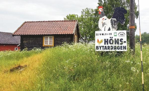 Dags igen för hönsbytardag vid Ukreda och Veteranmotormuseum i Österbymo.