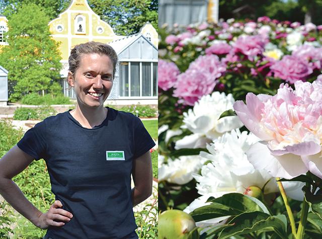 Klara Holmqvist basar över Julitas pioner.