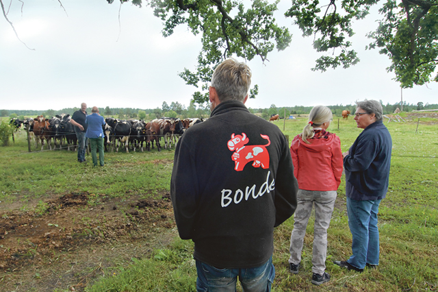 Deltagare besöker djurbesättningen på Åsvittinge.