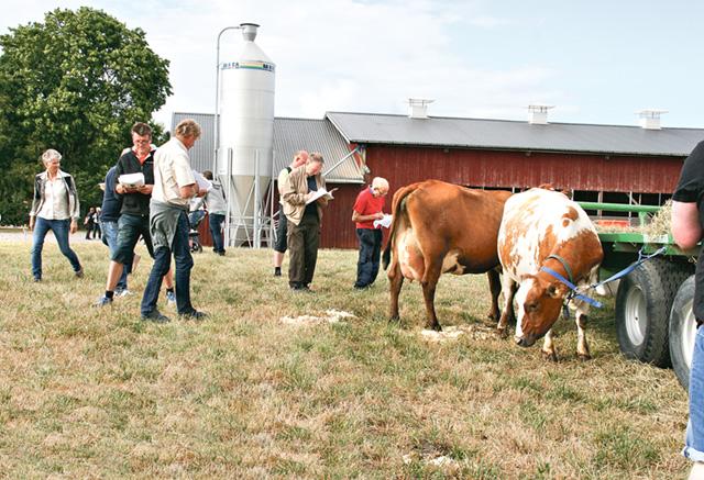 Jan har valt ut fyra kor med variation till exteriörbedömning.