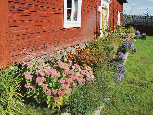 Höstrabattens varma färger står sig bra mot den faluröda timmerväggen
