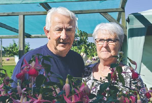 Att odla fuchsior i de mängder som Ingrid och Anders gör ger inga fritidsproblem.