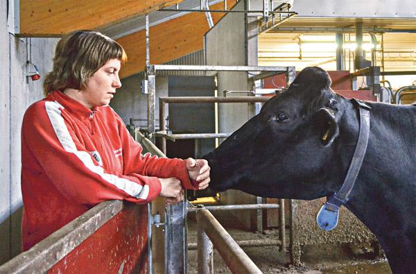 Kristin Yderfors är uppvuxen på gården Skärvinge utanför Finspång. Hon hade bestämt sig för att inte sätta sin fot i en ladugård – hon ville bli ekonom. Men slumpen ville annorlunda och det är hon tacksam för idag. Här en liten pratstund med en ko i den stora djurbesättningen.