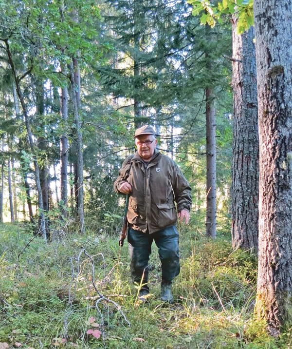 Roland med geväret på ryggen på väg ut till passet. Han känner alltid förväntan inför årets fösta älgpass, trots att han jagat älg sedan 1958.