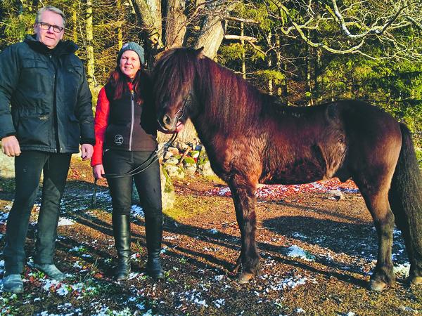 Uppfödaren Trausti Thor Gudmundsson och Åsa Strandberg med den nya hingsten.