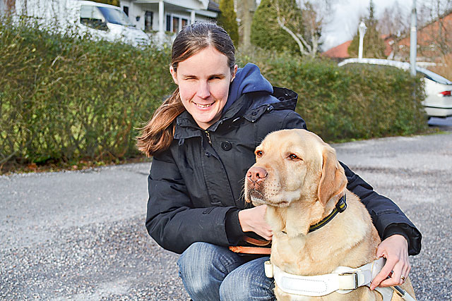 Labradoren Sigge är Mikaela Stigsdotter Larssons andra ledarhund