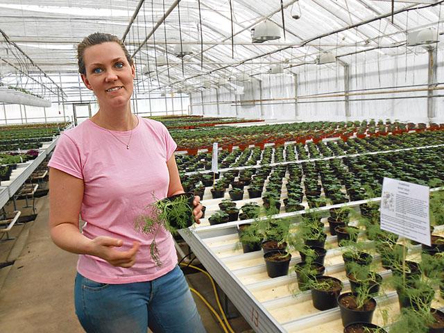 I växthuset för många olika kryddor visar Sofia Rönnel på flera lite ovanliga alternativ.
