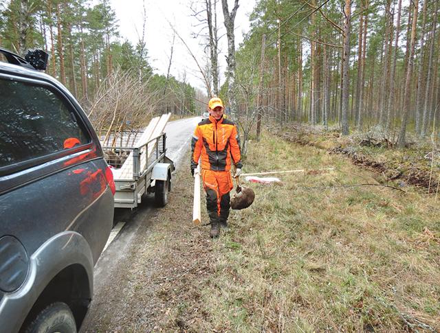 Erik Ottosson bär ut björkplantor tillsammans med en stabil pinne för att stödja dem, där de ska planteras utmed vägen över Tjenmossen.