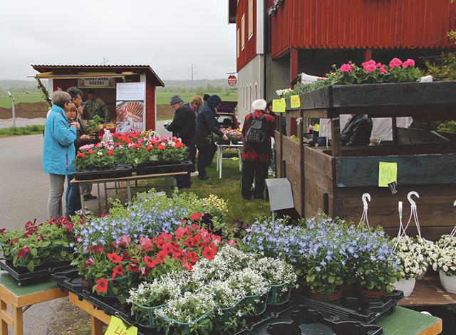 Grahns torghandels blomhav i olika färger och sorter.