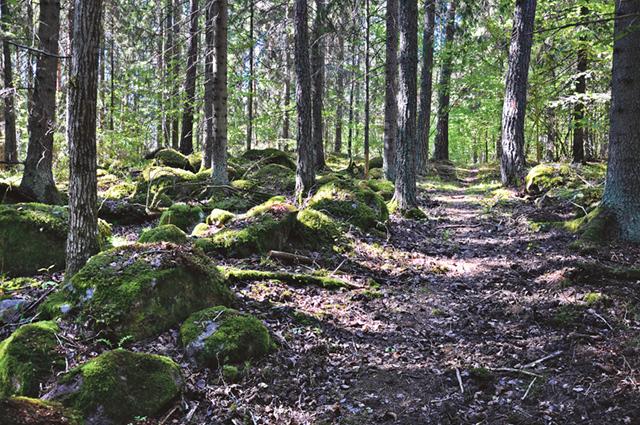 Stigar och leder finns att följa genom området.