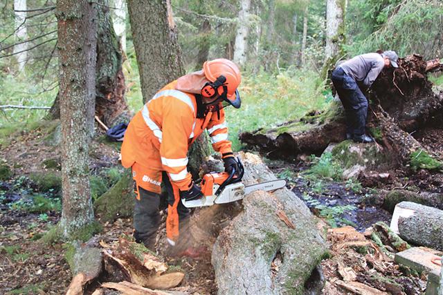 Berndt Wågman med motorsågen och Arne Sandberg vid rotvältan frilägger den anrika hälsokällan i Österskogen. Bild: EDDY ROSENLÖF