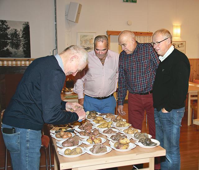 En tidig publik kollar när Torvald Fäldt dukar upp sina potatissorter. Själv odlar han 380 sorter.